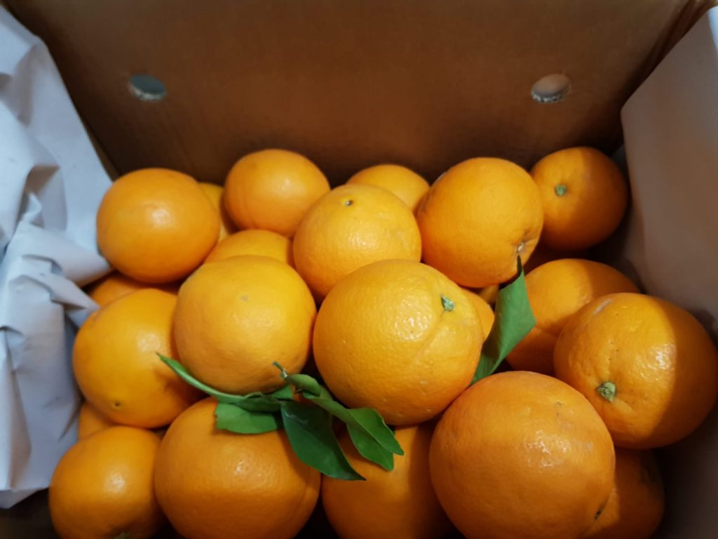 Unsere erste Lieferung Orangen